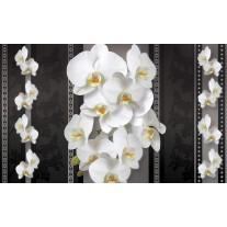 Fotobehang Papier Bloemen, Orchideeën | Zwart, Wit | 254x184cm