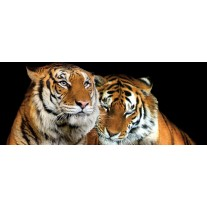 Fotobehang Wilde dieren | Zwart | 250x104cm