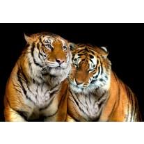 Fotobehang Papier Wilde dieren | Zwart | 368x254cm