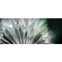 Fotobehang Bloemen | Groen, Wit | 250x104cm