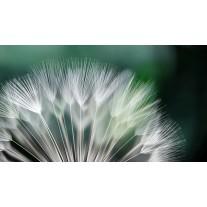 Fotobehang Papier Bloemen | Groen, Wit | 368x254cm