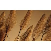 Fotobehang Papier Natuur | Bruin | 254x184cm