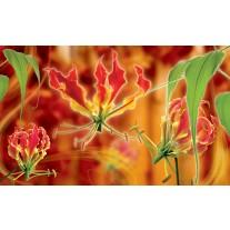 Fotobehang Papier Bloemen | Oranje | 368x254cm