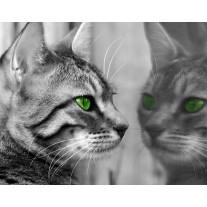 Fotobehang Papier Kat, Dieren | Grijs | 254x184cm