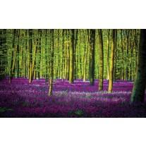 Fotobehang Papier Bos | Groen, Paars | 254x184cm