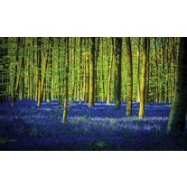 Fotobehang Papier Bos | Groen, Blauw | 254x184cm