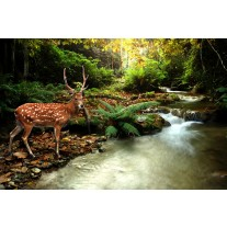 Fotobehang Papier Bos, Natuur | Bruin, Groen | 254x184cm