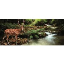 Fotobehang Bos, Natuur | Bruin, Groen | 250x104cm