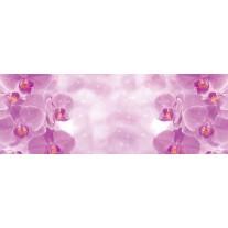 Fotobehang Vlies Bloemen, Orchidee | Paars | GROOT 832x254cm