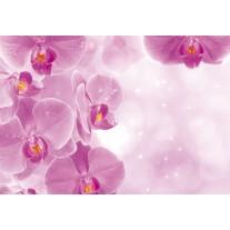 Fotobehang Papier Bloemen, Orchidee | Roze, Wit | 368x254cm