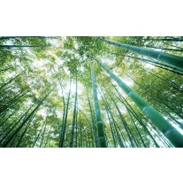 Fotobehang Bos, Natuur | Groen | 152,5x104cm