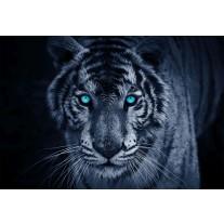 Fotobehang Papier Wilde Dieren | Blauw | 254x184cm