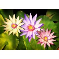 Fotobehang Papier Bloemen | Groen, Paars | 368x254cm