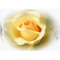 Fotobehang Papier Bloemen, Roos | Geel | 368x254cm
