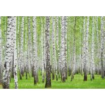 Fotobehang Papier Bos | Groen | 368x254cm