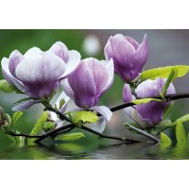 Fotobehang Papier Bloemen, Magnolia | Paars | 254x184cm