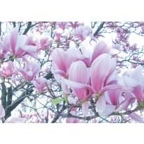 Fotobehang Papier Bloemen, Magnolia | Roze | 254x184cm