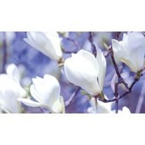Fotobehang Bloemen, Magnolia | Wit | 152,5x104cm
