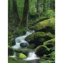 Fotobehang Natuur | Groen | 206x275cm