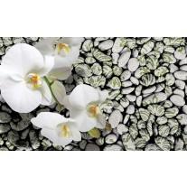 Fotobehang Papier Bloemen, Stenen | Groen | 368x254cm