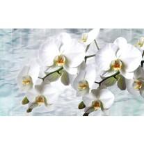 Fotobehang Papier Orchidee, Bloemen | Wit | 254x184cm