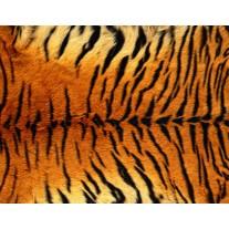 Fotobehang Papier Tijger | Bruin | 254x184cm