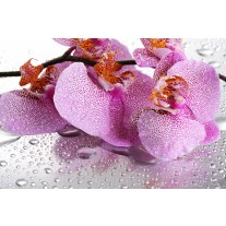 Fotobehang Bloemen, Orchidee | Paars | 152,5x104cm