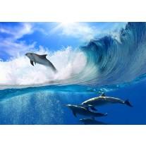 Fotobehang Papier Dolfijnen | Blauw | 368x254cm