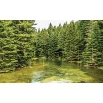 Fotobehang Papier Bomen | Groen | 368x254cm