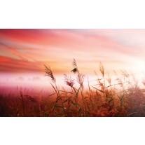 Fotobehang Papier Natuur | Roze | 254x184cm