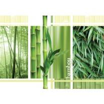 Fotobehang Papier Natuur | Groen | 368x254cm