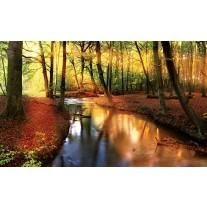 Fotobehang Papier Bos | Groen, Bruin | 368x254cm