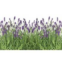 Fotobehang Papier Natuur, Lavendel | Groen | 254x184cm