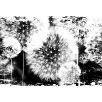 Fotobehang Papier Paardenbloem | Zwart, Wit | 368x254cm