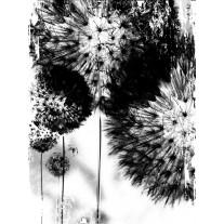 Fotobehang Bloemen   Zwart   206x275cm