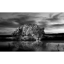 Fotobehang Papier Jaguar, Dieren | Zwart | 254x184cm