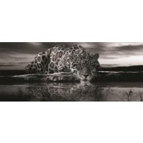 Fotobehang Jaguar, Dieren | Zwart | 250x104cm