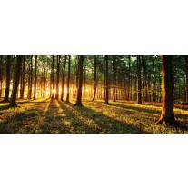 Fotobehang Bos, Natuur | Groen, Geel | 250x104cm