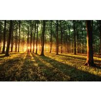 Fotobehang Bos, Natuur | Groen, Geel | 152,5x104cm