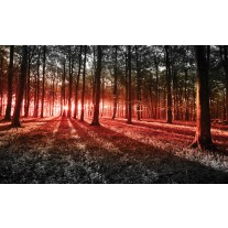 Fotobehang Papier Bos, Natuur | Rood | 254x184cm