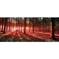 Fotobehang Bos, Natuur | Rood | 250x104cm