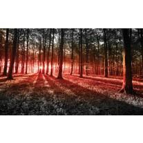 Fotobehang Papier Bos, Natuur | Rood | 368x254cm