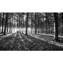 Fotobehang Papier Bos, Natuur | Zwart, Grijs | 368x254cm