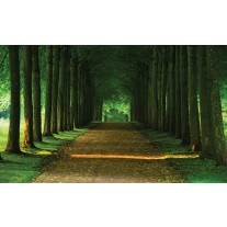 Fotobehang Papier Bos, Natuur | Groen | 254x184cm