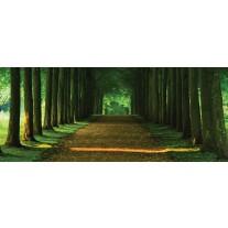Fotobehang Bos, Natuur | Groen | 250x104cm
