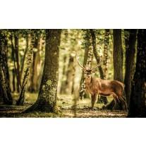 Fotobehang Papier Bos, Hert | Bruin | 368x254cm