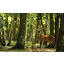 Fotobehang Papier Bos, Hert | Groen | 254x184cm