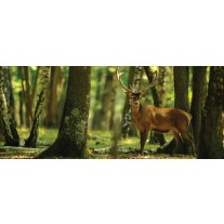 Fotobehang Bos, Hert | Groen | 250x104cm