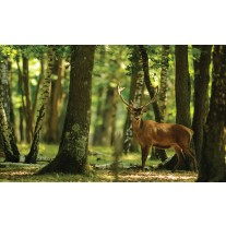 Fotobehang Papier Bos, Hert | Groen | 368x254cm