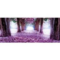 Fotobehang Bos, Natuur | Paars | 250x104cm